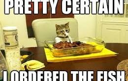 """#catsmemes explore Pinterest""""> #catsmemes,funny animal pictures, cat memes, #cats ex..."""