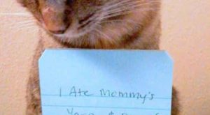 You will never cat shame them | 17 Signs You Might Be Really Obsessed……