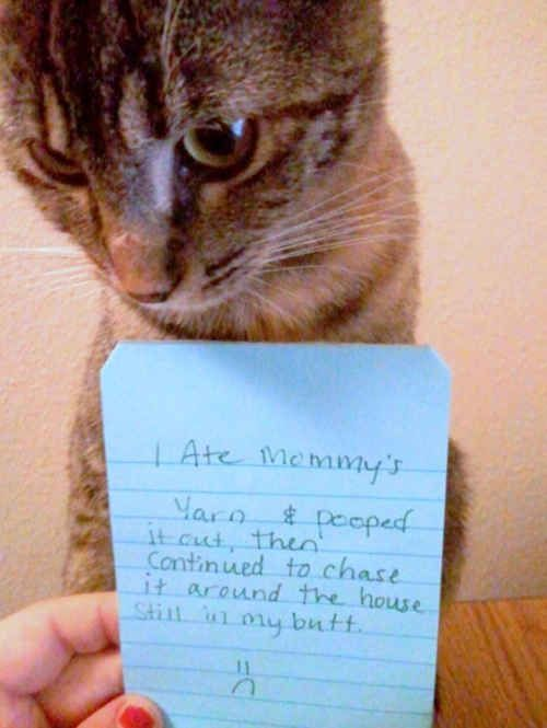 You will never cat shame them   17 Signs You Might Be Really Obsessed……