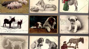 11 POSTCARD Antique Vintage = Animals Dogs Cat Donkey Pig w 1c + 2c…