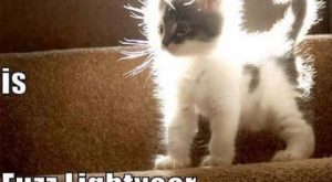 funny animals pictures with captions (56 pict) | Funny Pictures #compartirvideos search Pi...