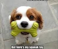 cute animal pics with captions – Google Search