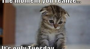 The Moment You Realize, It's Only Tuesday tuesday tuesday quotes happy tuesday tuesd...