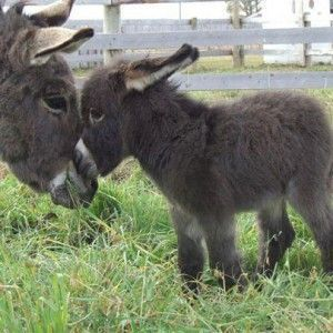 Funny Donkey Pictures with Captions | … captions funny donkey pictures with captions...