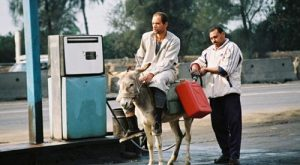 funny donkeys carrying loads