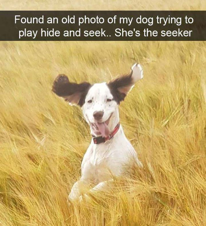 Hilarious Dog Memes That Will Cure Your Bad Day – 17