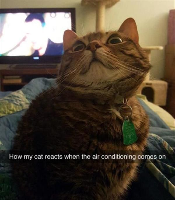 """23 Funny Animal Pictures Of The Day #funny explore Pinterest""""> #funny #picture ex..."""