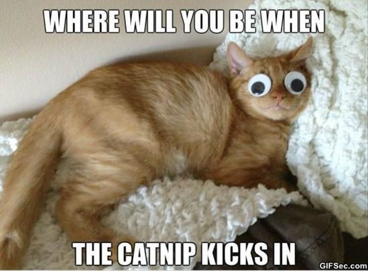 Funny Animal Pictures – 16 Images