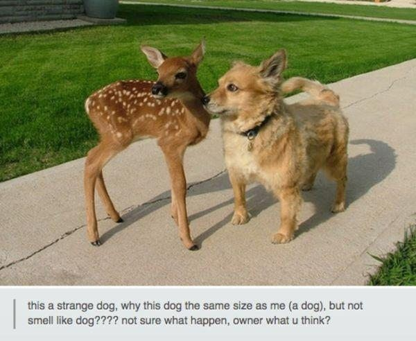 """The 19 Funniest Animal Posts On Tumblr Right Now #dogsfunnytext explore Pinterest""""&g..."""