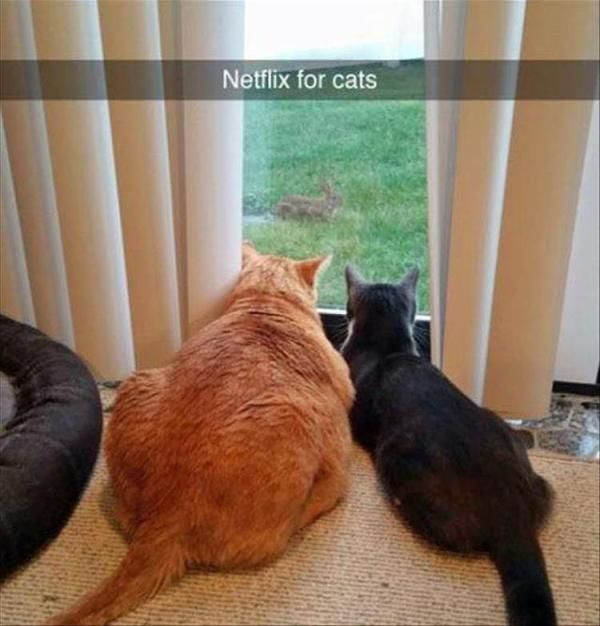 "24 Funny Animal Pictures Of The Day #funny explore Pinterest""> #funny #picture ex..."