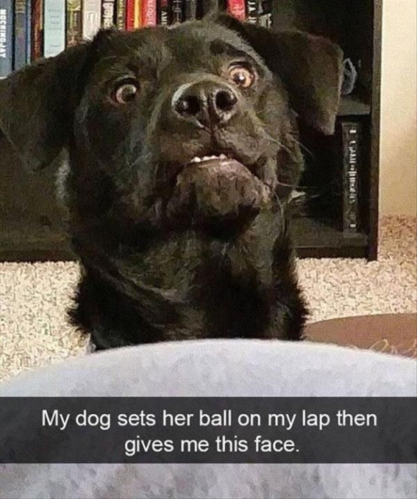 """24 Funny Animal Pictures Of The Day #funny explore Pinterest""""> #funny #picture ex..."""