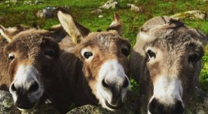The Irish Post shared this with me; Donkeys posing in Clifden, county Galway. Need…