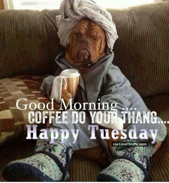 Funny Tuesday Good Morning Quote