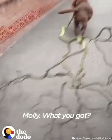 GIF My dog ​​loves big sticks