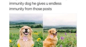 Image result for immunity dog