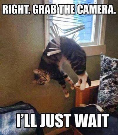 Right. Grab the camera. – I'll Just Wait