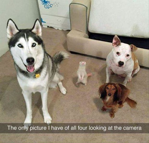Funny Animal Picture Dump Of The Day 29 Pics