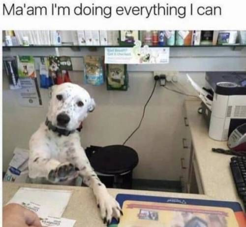 100 Animal Memes That Will Make Your Day