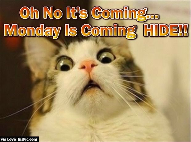 Oh No Monday Is !!