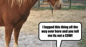 "Funny Horse Pictures With Captions #2 search Pinterest""> #2"