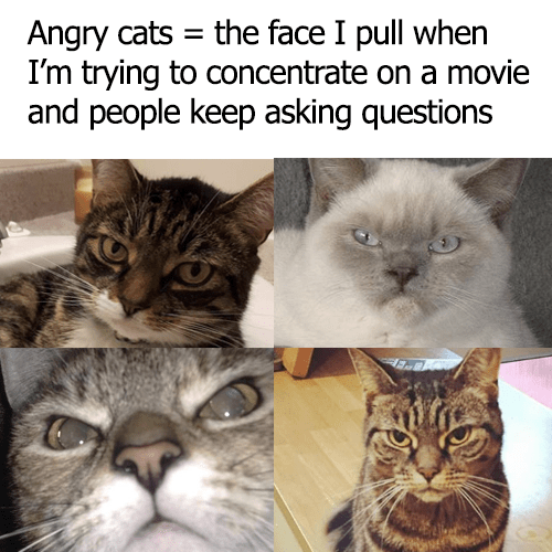 The Face Of Angry Cats