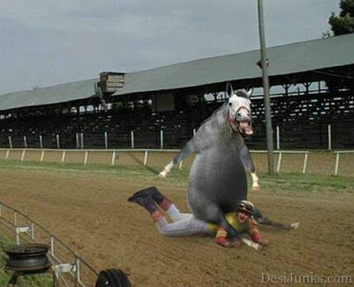 Funny horses | … ,see a picture or photograph of Funny Horse funny. Funny…