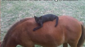 funny horse pictures | funny horse pictures cartoon with captions