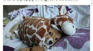 Funny Animal Pictures You Should See If You Need A Good Laugh – 17