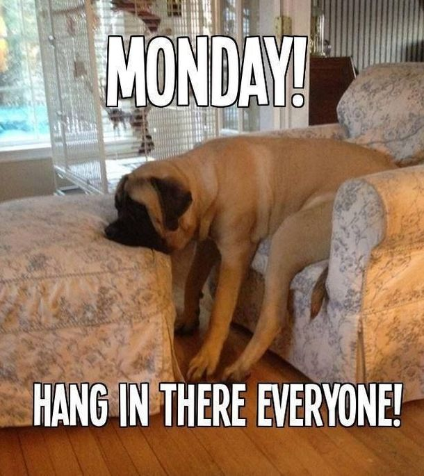 Yes it's Monday again! Monday's can be rough but we have 50 funny Happy…