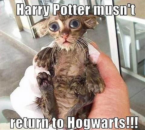 Check out this hilarious Harry Potter meme perfect for book nerds and cat lovers