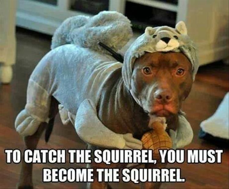 Funny Animal Pictures – 17 Images