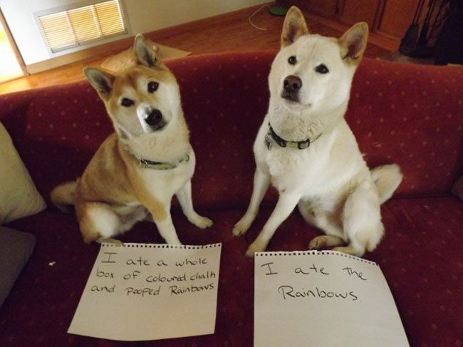 30 Naughty Dogs That Got Publicly Shamed – Dog Shaming