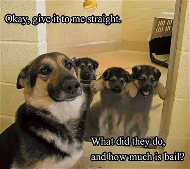 22 Funny Animal Pictures for Your Tuesday – Funny, meme #funnydogmeme explore Pinter...