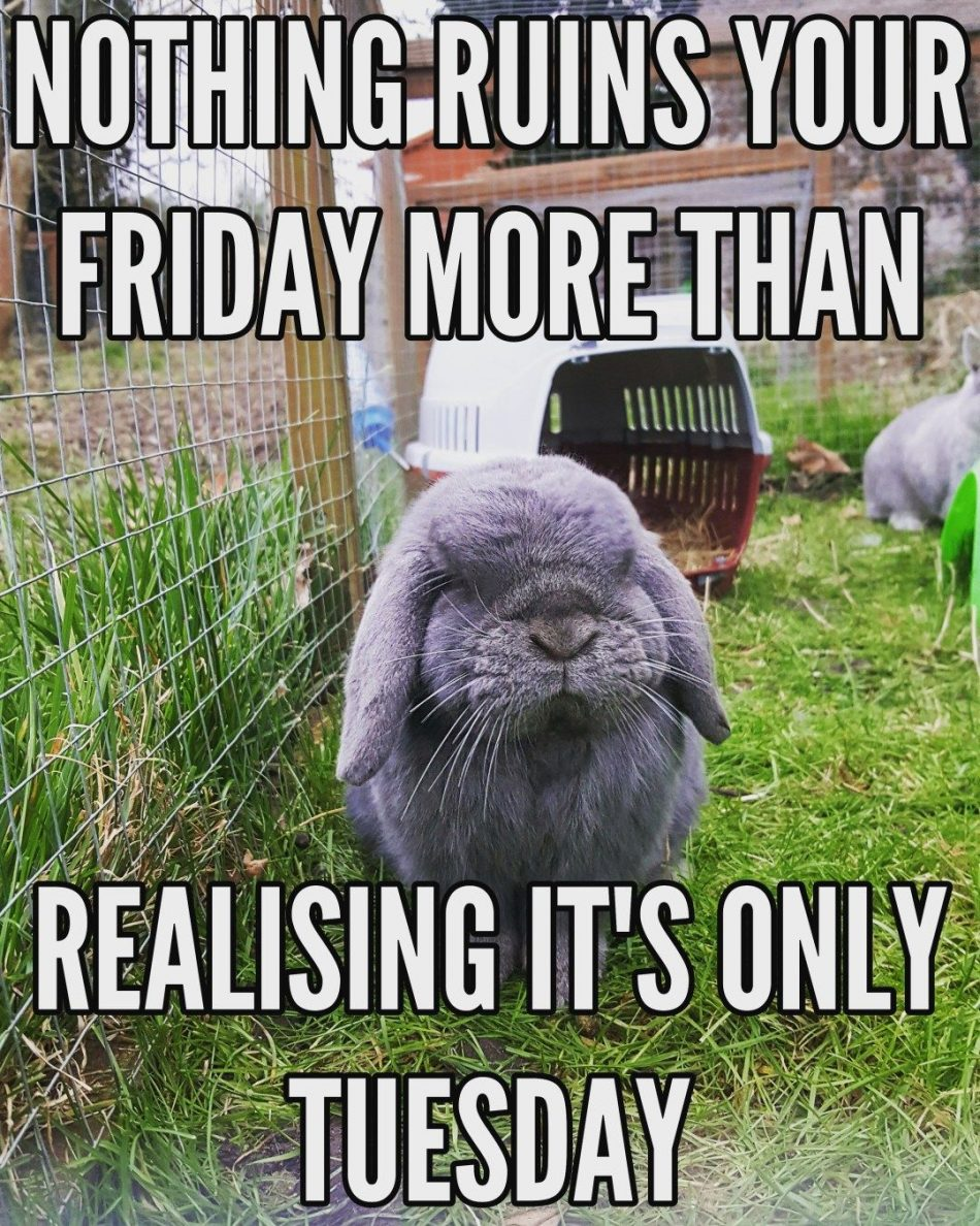 Pictures and memes from The Small Furry Hotel. Cute Pictures of Rabbits, Guinea Pigs…