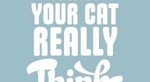What Your Cat Really Thinks About Your!
