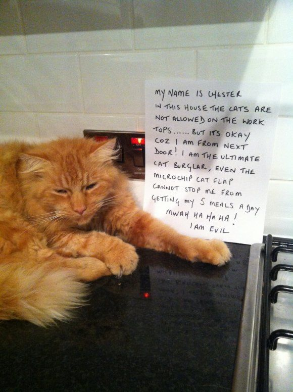 """My name is Chester. In this house, the cats are not allowed on the…"