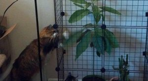 "#cats explore Pinterest""> #cats #shaming explore Pinterest""> #shaming #animals..."