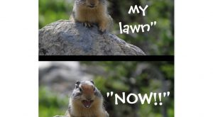 "Funny Ground Squirrel ""Get Off My Lawn"" caption postcard and products"