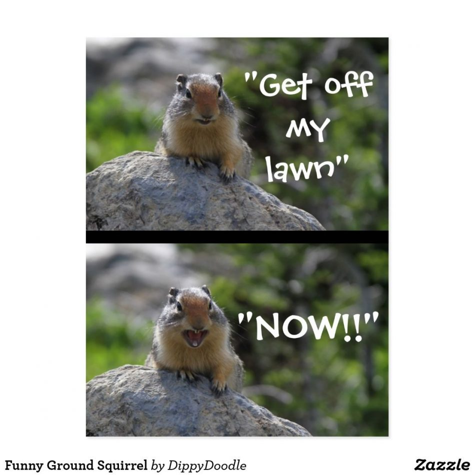 """Funny Ground Squirrel """"Get Off My Lawn"""" caption postcard and products"""