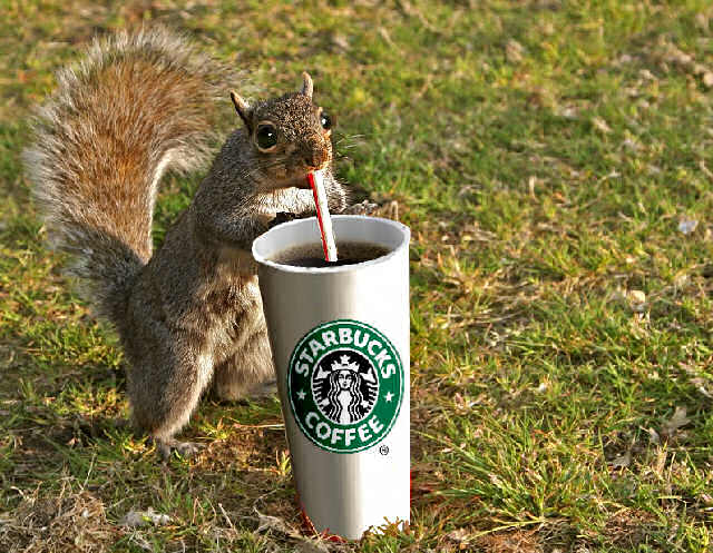 Another squirrel with coffee. This is a troubling omen indeed