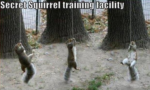 Dump A Day Beware Of Animals With Funny Captions – 24 Pics