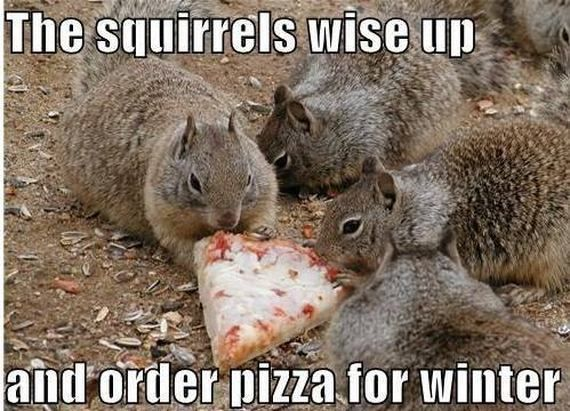 Cute Animals With Funny Captions | compilation of cute animal photos with funny captions