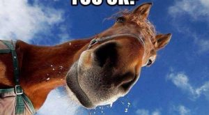 Hilarious Horse Memes | The Original Mane 'n Tail – Animal Care – The…...