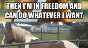 "Well, that didn't work out as #horses explore Pinterest""> #horses #humor ex..."