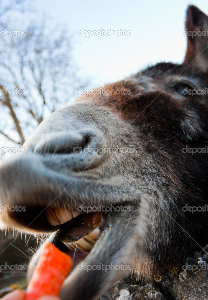 Funny Animals Funny Pictures: Funny Donkey Face Images