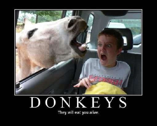 And the truth about donkeys finally comes out