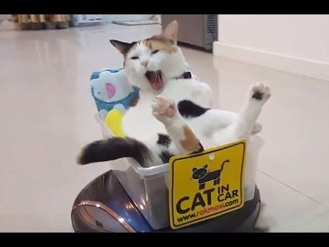 Funny Cats On Roomba – Cat Riding Roomba Like A Boss | funny cats…