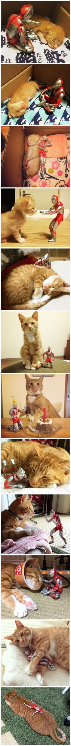 35+ Funny Pet Expression | This Cat's Favorite Toy Has Been With Him Since…