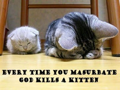 funny cats with captions – Google Search
