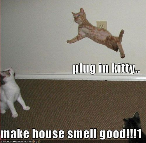 Funny Cat Pictures with Captions | Funny Cat Pictures With Captions | Funny and…